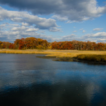 Pelham Bay Marshes